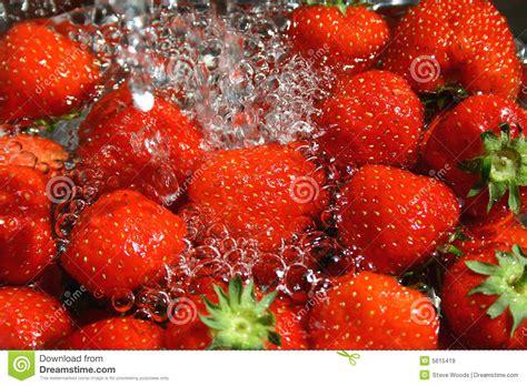 strawberry wash stock image image of produce berries