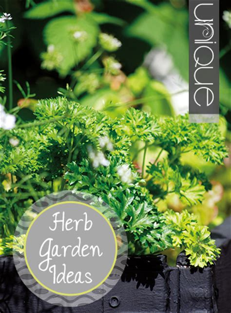 unique ideas  herb gardens indoor