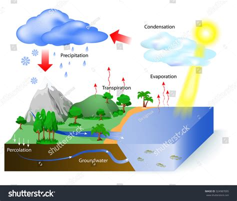 diagram to show evaporation water cycle diagram sun which drives stock vector
