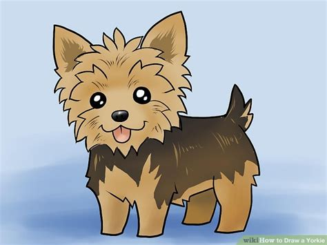 how to yorkie puppies how to draw a yorkie with pictures wikihow