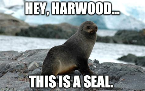 Seal Meme Generator - image tagged in seal imgflip