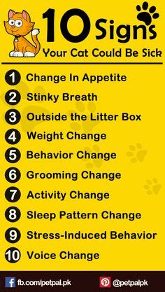 signs your is sick 1000 images about cat on cardboard interactive cat toys and cats