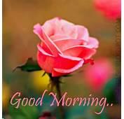 Romantic Good Morning Wallpaper  WallpaperSafari