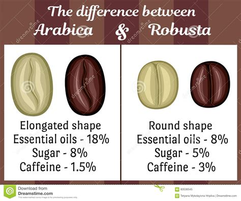 The Difference Between Arabica And Robusta Stock Vector   Image: 83536545