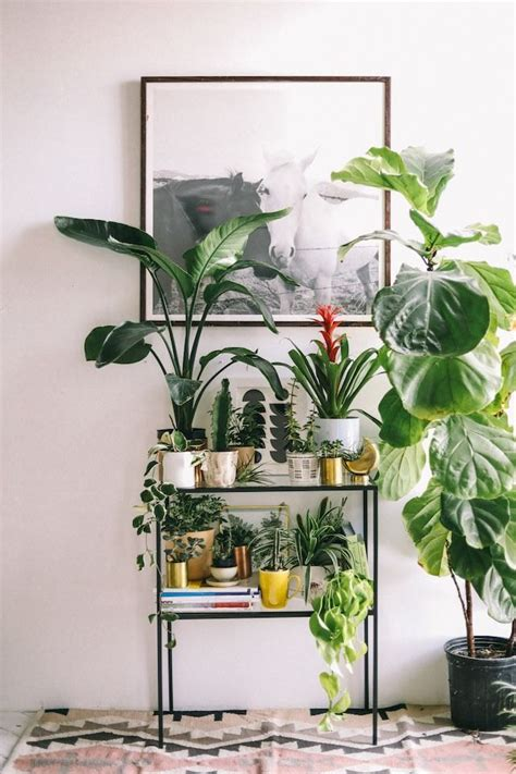 apartment plants ideas best 25 indoor plant stands ideas on pinterest indoor