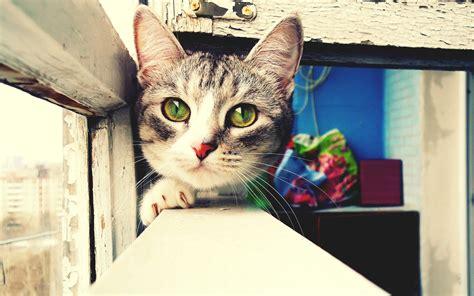 imagenes artisticas de gatos sfondo gatto occhi verdi solosfondi com
