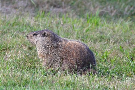 groundhog day groundhog name 66 square plus groundhog day