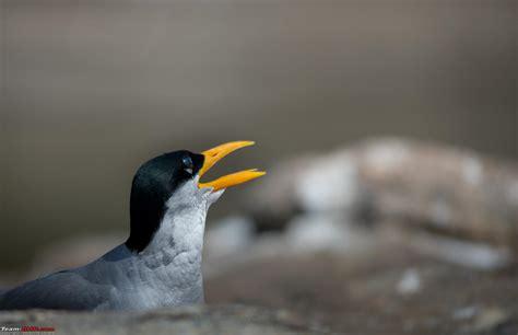 photologue two hours ranganathittu bird sanctuary