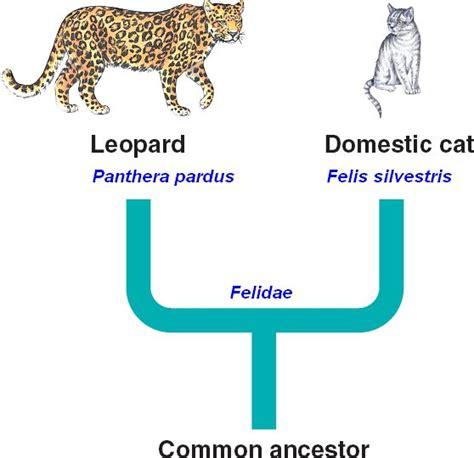 scientific name binomial html 25 09carnivoraphylogenyb jpg