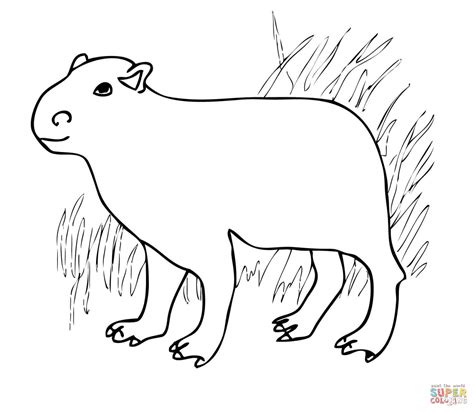 capybara from south america coloring page free printable