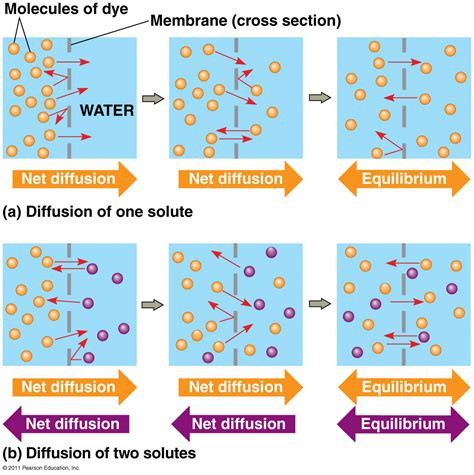 diffusion different exles of diffusion movement of