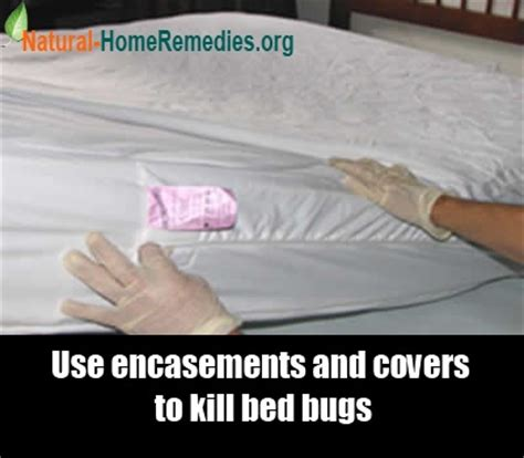 does the dryer kill bed bugs 7 home remedies for bed bugs natural treatments cures