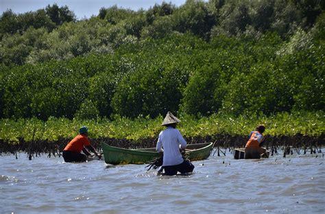 Bibit Mangrove hal hal yang dilupakan dalam rehabilitasi mangrove mongabay co id