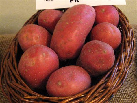Potato Wiki by Potato