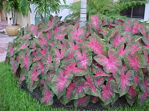 best plants for shade with lights 25 best ideas about best plants for shade on plants for shade room to grow and