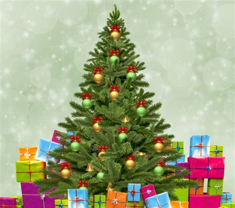 logged netted christmas trees in manchester tree with gifts free stock photo domain pictures