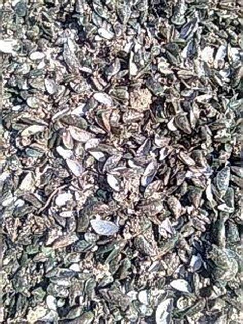 Tepung Cangkang Kerang aid jual tepung cangkang kerang