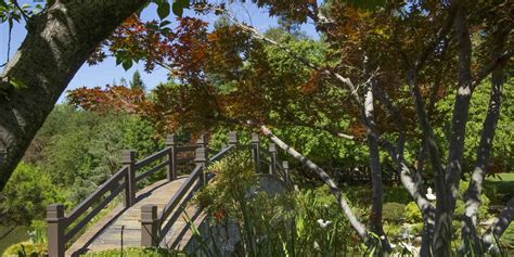 woodwork park discover fresno s beautiful expansive park