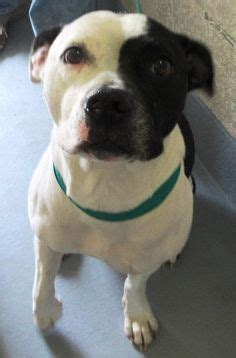 portage county warden friends of fulton county animal services id a451960 i am currently available