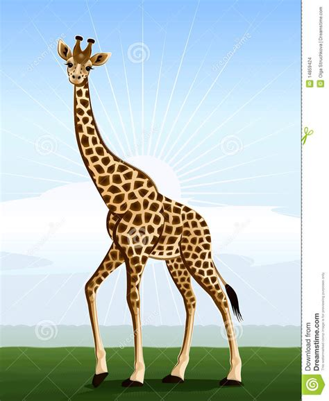 imágenes de jirafas bonitas jirafa grande eyed ilustraci 243 n del vector imagen de eyed