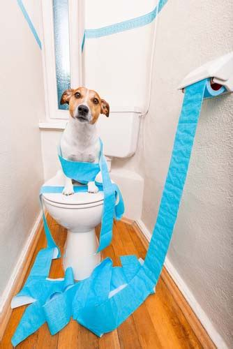 how to stop diarrhea in dogs top 7 best diarrhea remedies in 2017