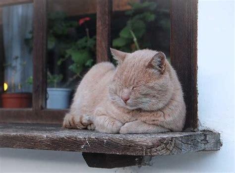 wann ist katze ausgewachsen katze im alter sch 246 ner lebensabend f 252 r die katze