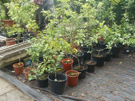 planting fruit trees in fall how and why you should plant fruit trees in the fall