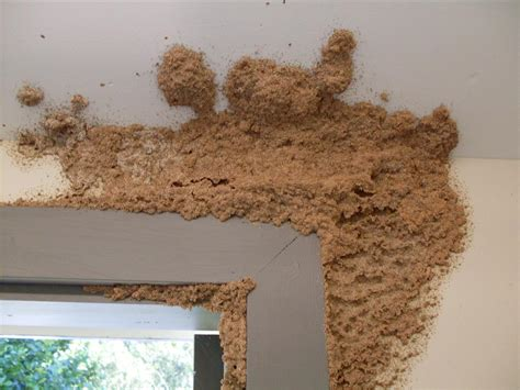termites in house do you have an air conditioner or hot water service leaking next to your home pestec