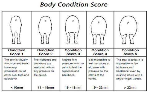 condition score condition score