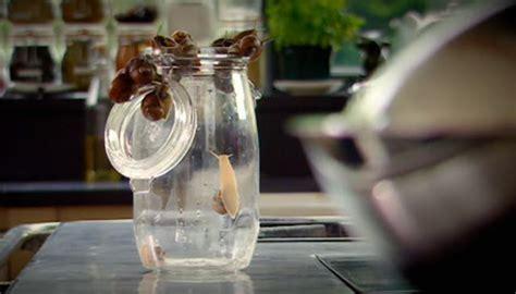 How To Detox Garden Snails Gordon by Fidgety Fingers Which Garden Snail Is Edible