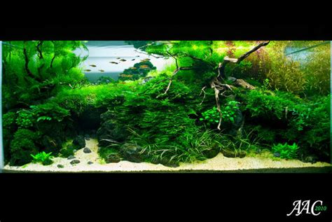 Aquascape Malaysia by Manage Your Freshwater Aquarium Tropical Fishes And