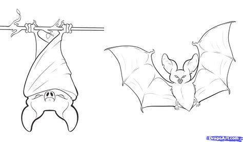 simple bat coloring page how to draw bats step by step forest animals animals