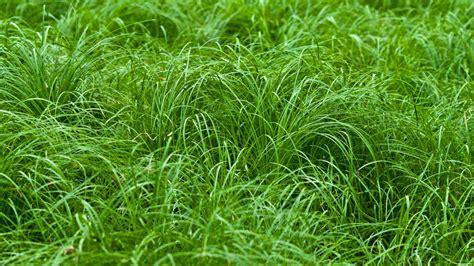 Grass Paper - grass paper wallpaper wallpapersafari