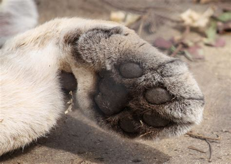 how to a not to paw at you file paw jpg wikimedia commons