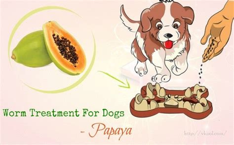 treatment for worms in dogs images