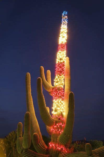 saguaro cactus christmas trees saguaro cactus arizona southwest arizona travel