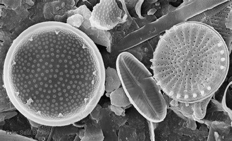 imagenes reales y virtuales en un microscopio optico celulas eucariotas y procariotas fotos reales de