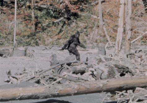 history of bigfoot monster bigfoot a cryptid history crypto sightings