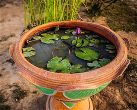 miniteich anlegen pflanzen fische und 220 berwintern