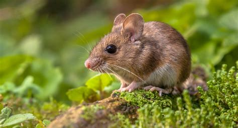 How To Get Rid Of Mice In Your Garage Contractor Quotes