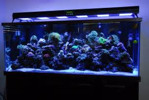 led beleuchtung meerwasseraquarium ledbot led lighting for fish tank aquarium