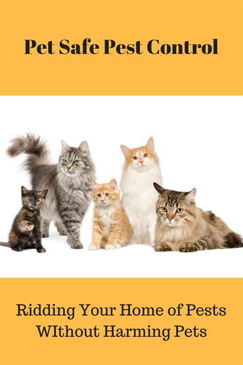 killer safe for dogs pet safe pest get rid of pests without harming pets fully feline