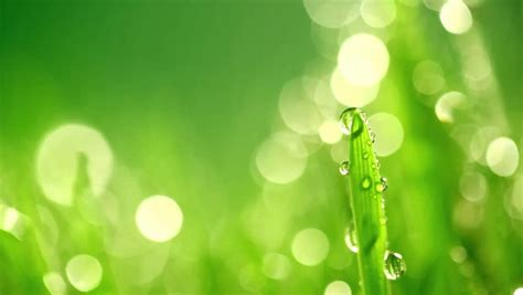Wedding Background Design Green by Bokeh Abstract Background Wallpaper Green For