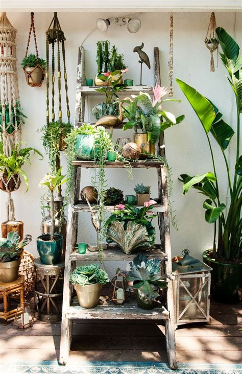 room with plants 25 best plant rooms ideas on pinterest plants indoor