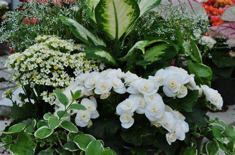 White Flowers Garden White Flowers For Shade Garden 2 Free Hd Wallpaper
