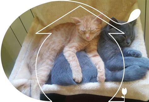 pensione per gatti pavia lefusa pensione hotel a 5 stelle per gatti pavia