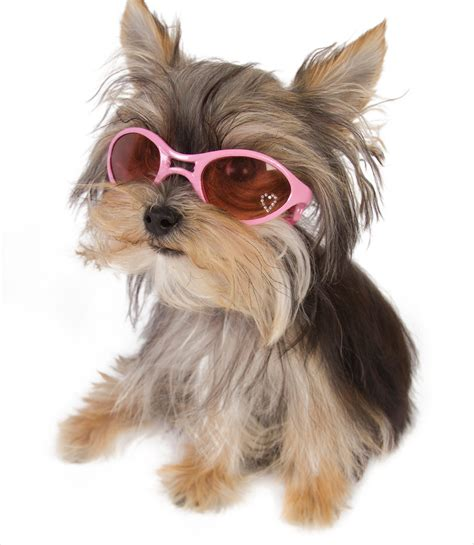dogs with glasses dogs with glasses doglers