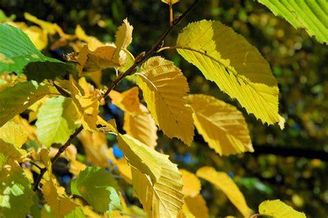 Herbstlaub Garten by Herbstlaub Im Garten Einfach Kompostieren Ahabc De