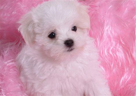 babies puppies baby puppies pictures to pin on pinsdaddy