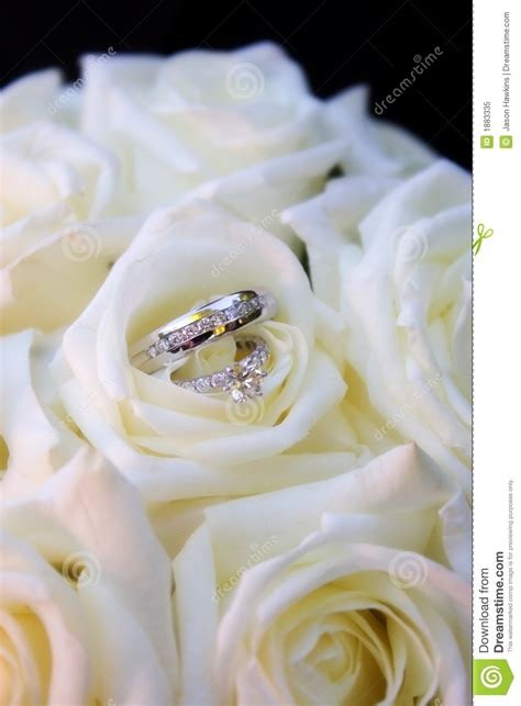 rings in white roses royalty free stock photo image 1883335